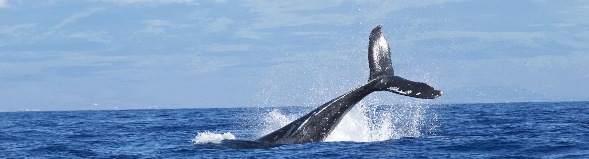 Hiking in Liguria for whale watching: Book now on our hotel!
